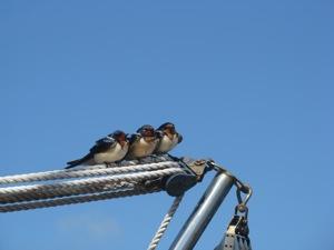 Birds War Conference
