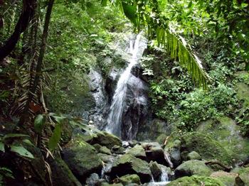 Sapzurro Waterfall