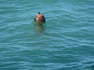 Crab Pots Masquerade as TIny Time Bombs!