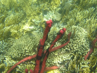 Underwater, Brittle Stars Are Plentiful