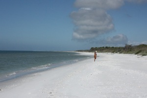 Miles Long Barrier Island Beach ... No Other Footprints