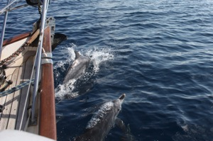 Dolphins Play With Our Bow Wake