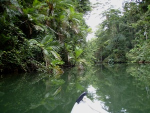 Exploring Shallow Tributaries by Kayak