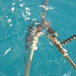 Snubber Nylon is Taunt and Chain is Loose. Note the Filefish Hanging Out by Our Anchor Chain!