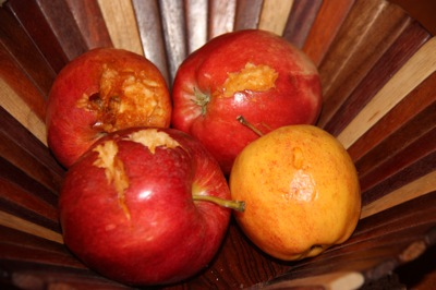 My Prize Gala Apples, note the oldest shriveled apple wasn't touched!