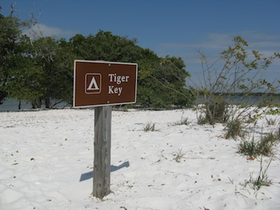 Tiger Key is one of the tiny white sand beach islands dotting the area. We found shells here.