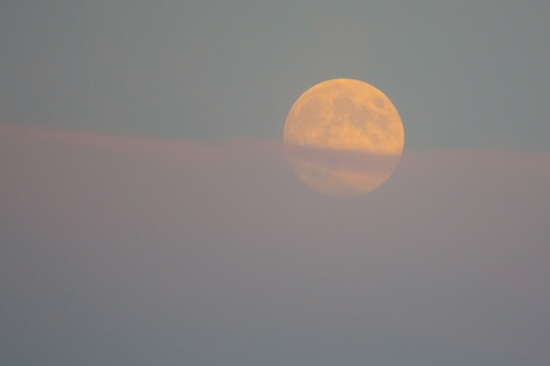Because the Harvest Moon rose at 6:19 PM, which was before sunset, it's not as brilliantly orange as usual.
