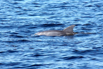 And more dolphins ... we wonder if these are the same dolphins that do the feeding frenzy dance around our boat in the slip?