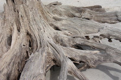 Driftwood on the north end of the beach ... walk far enough and you can gaze across Boca Grande Pass to the historic Boca Grande Lighthouse.