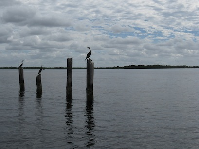 Cormorants pose on posts.
