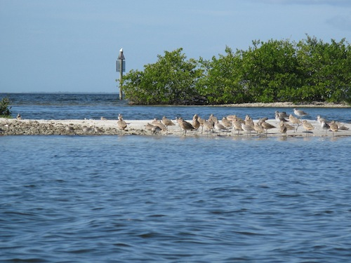 Shorebirds gather on a sandbar just outside the channel.
