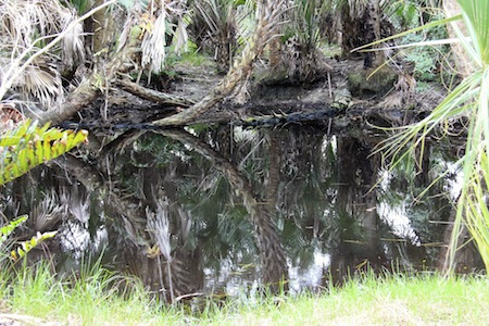 Reflections in a pond at the Alligator River Preserve.