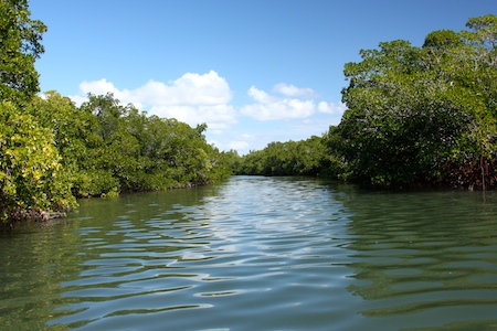 The small mangrove channel leading to Don Pedro State Park