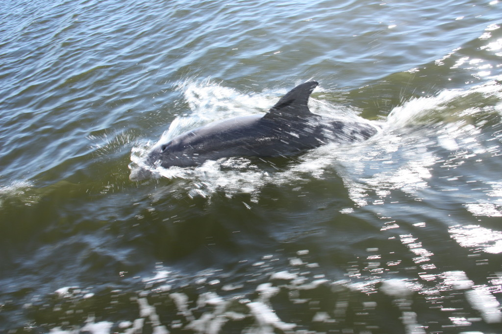 Morning Dolphin Show
