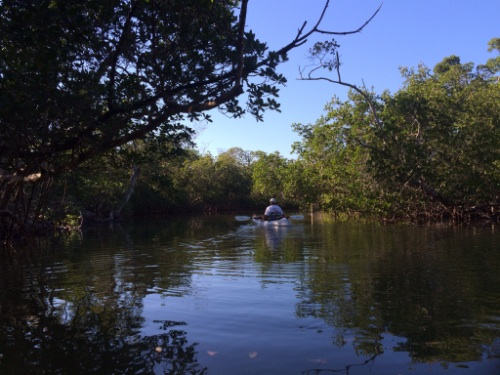 Paddling into the reflective maze of the Commodore Creek Kayak Trail, Sanibel Island.