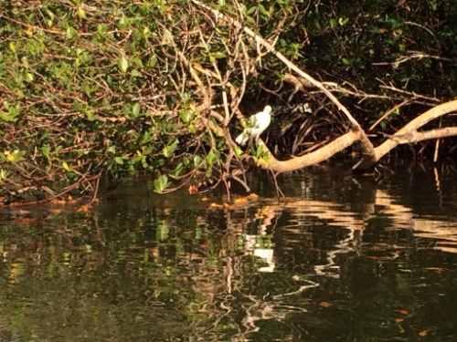 Even the birds are reflected in the calm still waters of Tarpon Bay and the kayak trail.