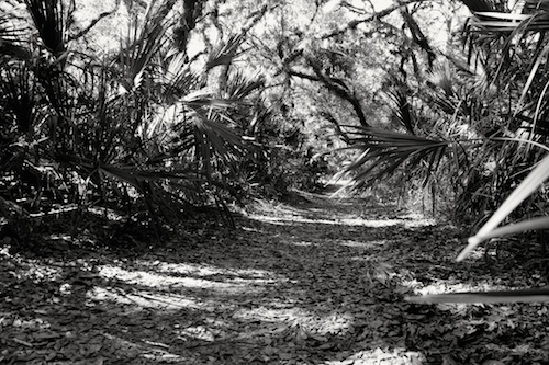 The scenic path to the Myakka River in the Sleeping Turtle Preserve North.