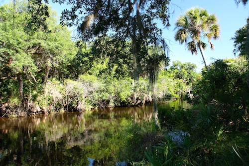 The scenic Myakka River.