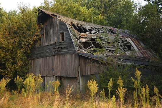 My favorite old barn - and we saw the owl on our walk yesterday.