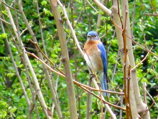 Bluebirds everywhere!