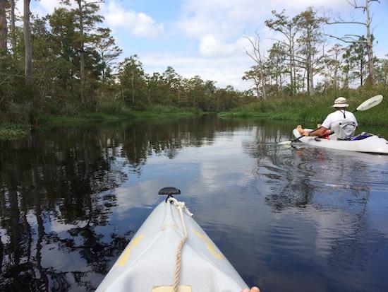 Paddling in the Alligator River National Wildlife Refuge.