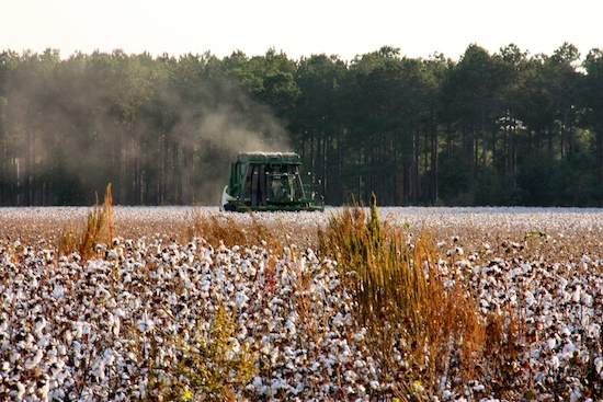 "A cotton ""combine""?  Cotton Picker?  Whatever the name, they're busy mining the cotton fields in southern Georgia!  Not a sight this Midwestern corn belt gal has ever seen!"
