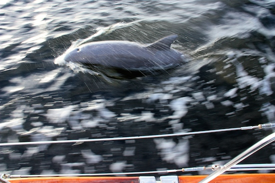 What happened to the settings on the camera?  Yikes, but kind of a cool dolphin effect....  Dolphins in the ICW ... twice!