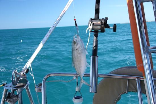 Here fishie, fishie, fishie....