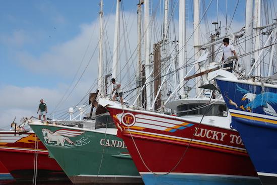 Line up of shrimp boats across from Stock Island Marina.