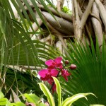 Orchids & Banyan Trees