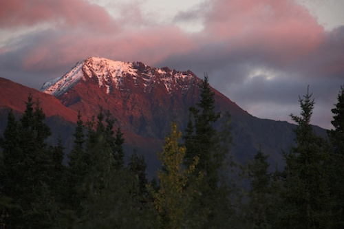 Alpenglow behind our camper at Teklanika, Denali National Park