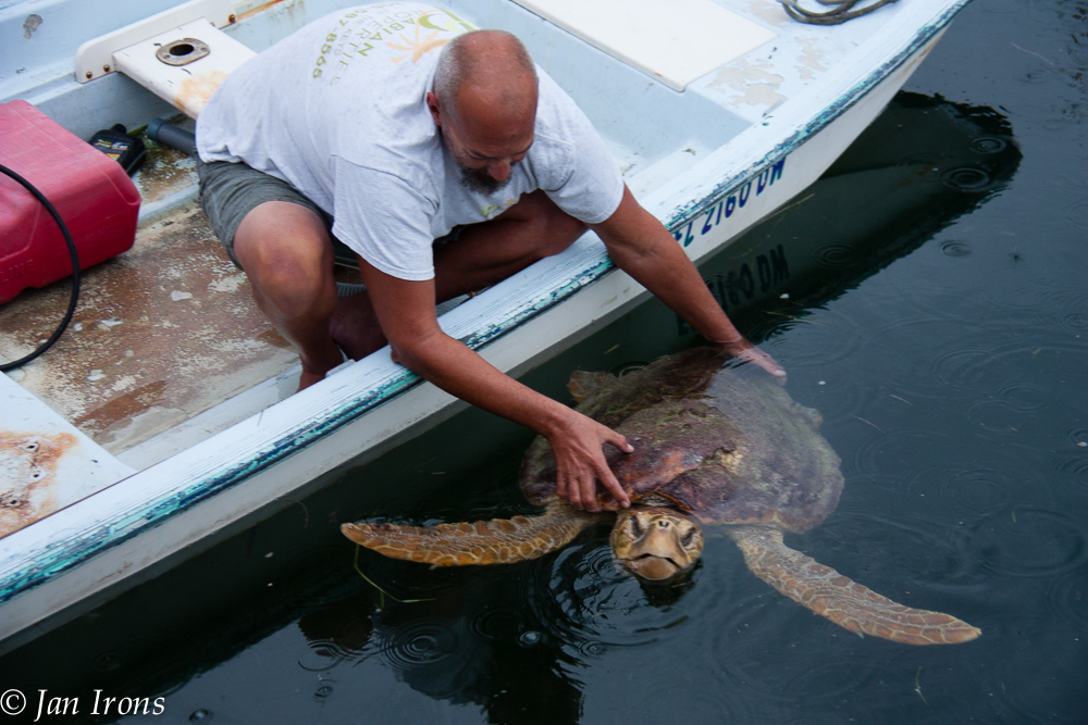 Mr s/v LaVida, holding the loggerhead turtle until help could arrive.