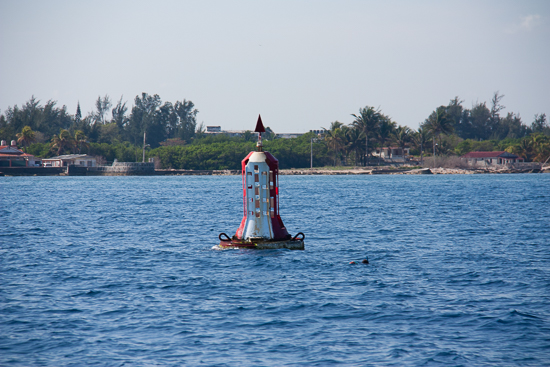 The sea buoy at Marina Hemingway! Look carefully, you can see the head of a freediver out gathering dinner.