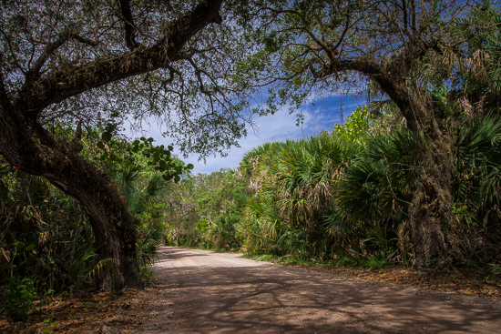 Walkway to the beach, Cayo Costa State Park.